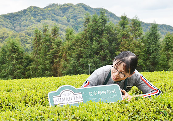 As demand grows for green tea, manufacturing shifts to a new plant in China - the company's third major plant.