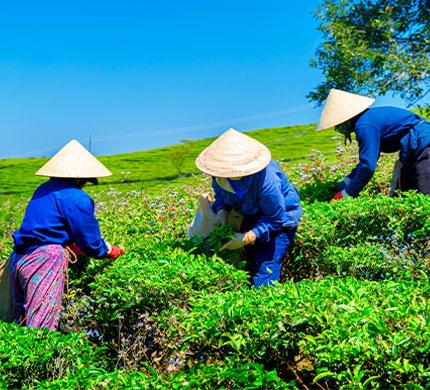 Ethical Tea Partnership