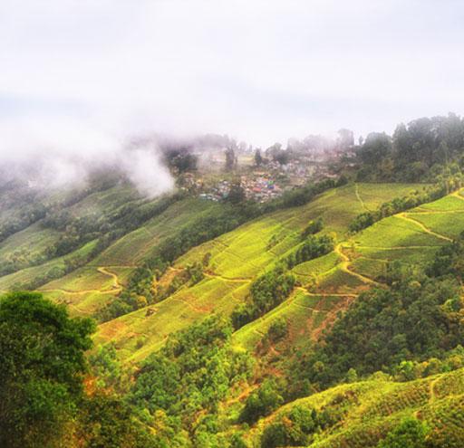 Darjeeling high tea